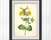 Flower Print 76, botanical art vintage illustration, produced from a vintage bookplate, 8x11 wall art.