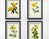 4 Botanical Illustration 5 x 7 inch Buy Any 4 botanical prints, all produced from an vintage book plate