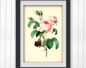 Pink Rose Botanical Art Print 180,  instant download printable art