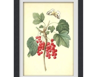 RED BERRY PRINT, Redoute illustration, botanical image,  produced from a vintage bookplate, 8x11 wall art. Instant Download No 22