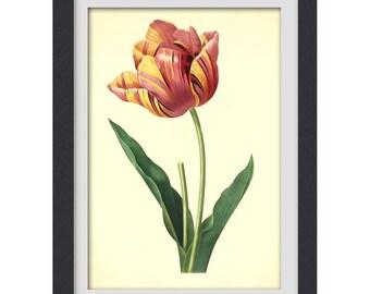 Tulip Print, spring flowers digital botanical printable PDF, 8 x 11 inch wall art, INSTANT DOWNLOAD No 25