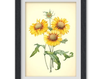 Wall art 41, a botanical illustration produced from an antique book plate.