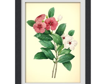 Botanical Digital print 49, botanical art print produced from a vintage book plate.