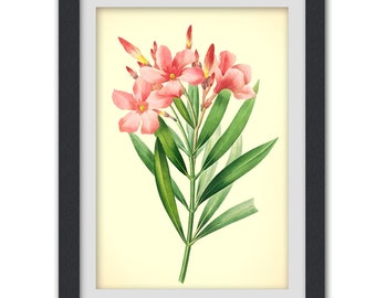 Vintage wall art 55 8x11 botanical art print produced from a vintage book plate.