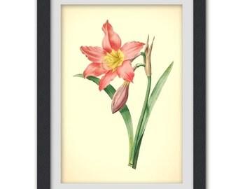 Pink Flower Botanical Digital Print, Home decor Wall Art, instant download printable art, No 60