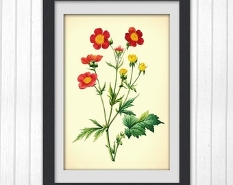 Antique Botanical Print, Red Flower digital wall art, INSTANT DOWNLOAD