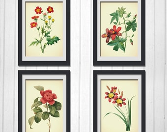 Botanical Print Set, 4 Red flower prints botanical home decor wall art, INSTANT DOWNLOAD