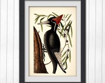 8x10 bird print, Home decor wall art,digital print of a vintage illustration, #83 INSTANT DOWNLOAD