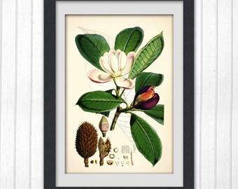 Botanical digital print, Green and White vintage flower print, instant wall art, Vintage Print 94,