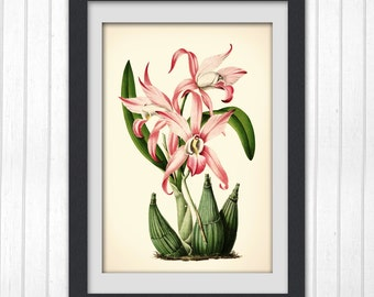Digital Botanical Illustration Pink Floral Wall art #110, up cycled from a vintage illustrated book plate.