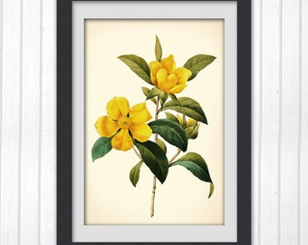 Digital art print yellow flower print 120,  produced from a vintage illustration upcycled from a bookplate.