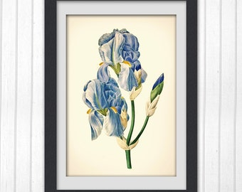 Botanical Wall Art, Blue flower #152 INSTANT DOWNLOAD