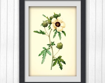 Wall print 177, a botanical art print produced from an vintage book plate.