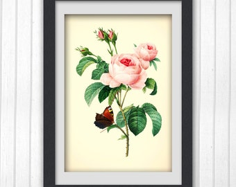 Pink Rose Botanical Art Print 180,  instant download printable art