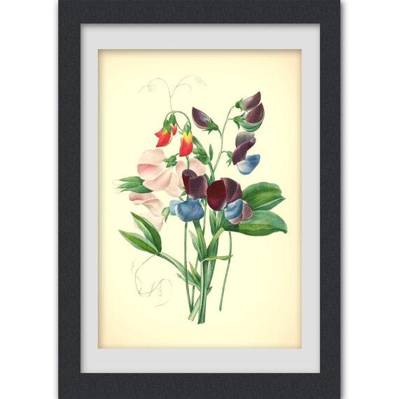 Restored Botanical art 40, a vintage digital botanical illustration produced from an antique book plate.