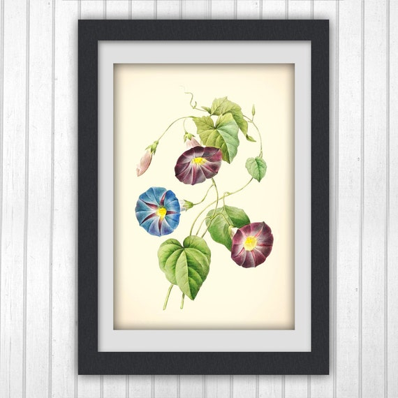 Botancial Print 169, Redoute  botanical illustration, produced from a vintage bookplate, 8x11 wall art.