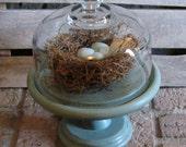 Pedestal Cloche Duck Egg Blue Nest
