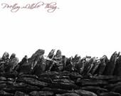 Kentucky Farm-Stone Wall-8x10 Matted Print