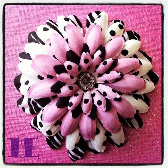 White zebra pink combo gerbera daisy