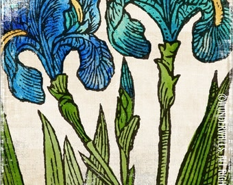 """Iris Turquoise Green Blue Flowers on Watercolor Linen Botanical High-Quality, Archival 8"""" x 10"""" Print: Two Iris"""