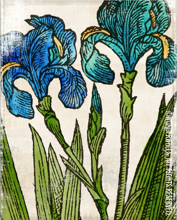 """Iris Turquoise Green Blue Flowers on Watercolor Linen Botanical Large 16"""" x 20"""" Canvas-Wrapped Frame: Two Iris"""