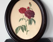 Vintage Rose print - Oval Frame with Glass
