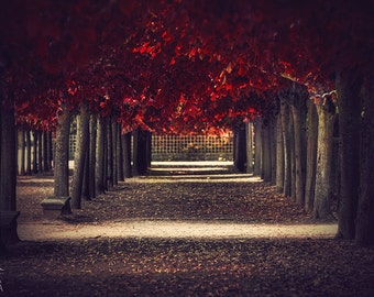 Wall art red colors of autumn, surreal photo, red trees, tunnel alley in a park, print you can frame for your wall, Paris decor