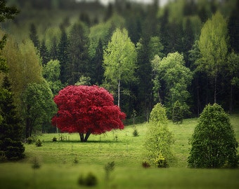 Digital file, nature decor wall art with red tree of autumn, surreal photo, red tree, Finland forest wall art