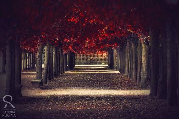 Red colors of autumn, surreal photo, red trees, tunnel alley in a park, print you can frame for your wall, Paris