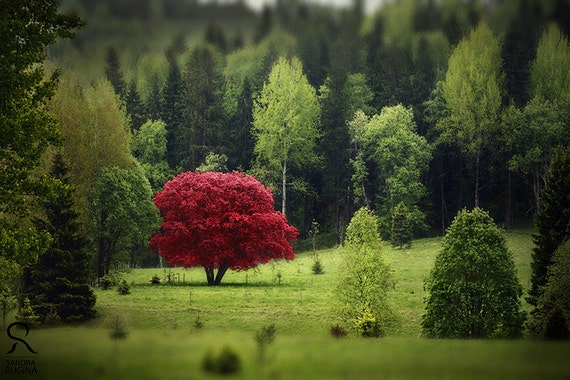 Nature decor wall art with red tree of autumn, surreal photo, red tree, alley in a park, Finland wall art