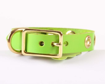 Spring Green Leather Dog Collar with Grommets