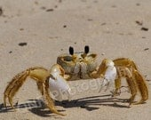 "Bring It (ghost crab stares me down) - 8x10"" print"