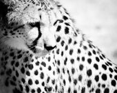 Cheetah Wildlife Art - Fine Art Photography - Nature Home Decor -  Black and White Wall Art - Monochrome Animal Photography