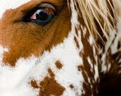 Wild Horse Fine Art Photography - Horse Wall Decor - North Dakota Wildlife Decor - Badlands Photo Print