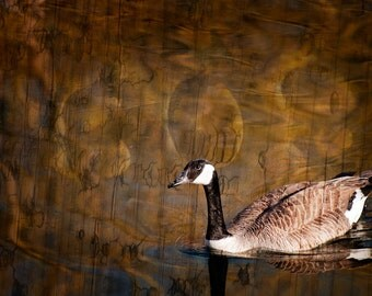 Canada Goose Wall Art - Textured Artwork - Rustic Animal Photo - Wildlife Home Decor Fine Art Photography Print