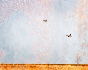 Canadian Geese - Prairie Art, Textured Contemporary Fine Art Photography Print - Large Landscape