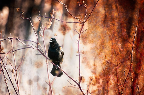 Textured Wall Art - Surreal Home Decor - Red Winged Blackbird Rustic Fine Art Color Animal Photography