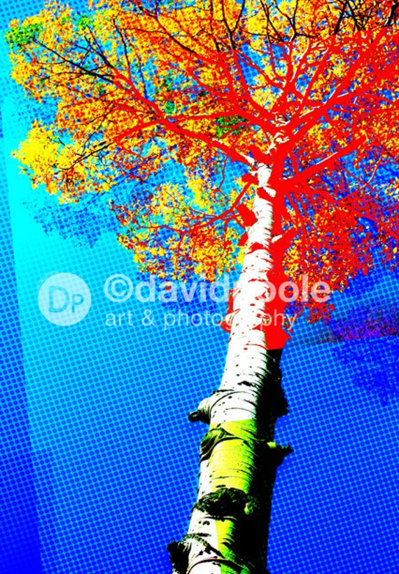 Popart Aspen in Colorado. Photography Print 8x10 Popart Fine Art Colorado Landscape