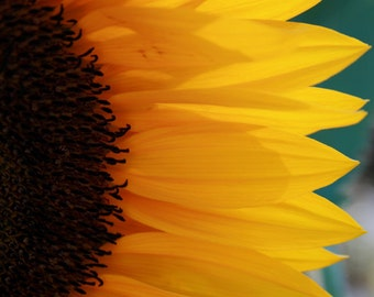 Sunflower, Happy, Fun, Birthdays, Get Well, Missing You, I Love You, Macro image, Fine Art Photography, Note Cards, Under 50.00, Yellow, Fun