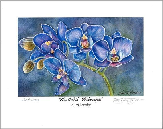 Blue Orchid Flower Fine Art Print Size Apx 5x7