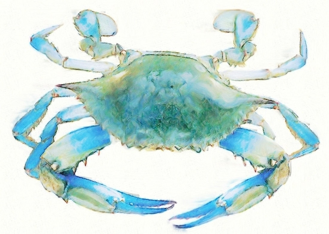 It's just a picture of Gargantuan Blue Crab Drawing