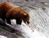 Kinetic - Nature Photography Print, Brown Grizzly Bear Catching Salmon Jumping Up Waterfall, fish, river, wildlife