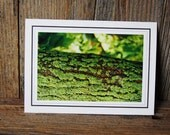 Wood, Moss, Bark, Stonework Collection, Forest Green, Upper Michigan, 4, Photo Card, Matted Photo, Gift, Collectable, Interchangeable Art.
