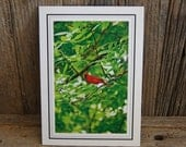 Spring and Summer Collection. Cardinal. Photo Card and Matted Photo, Gift. Collectable, Interchangeable Art.