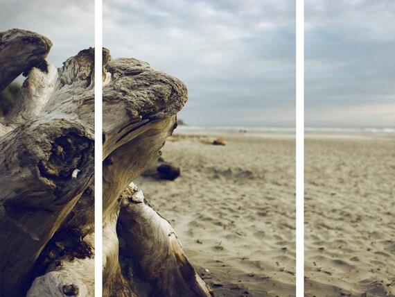 Beach Drift Wood - Oregon Coast Photography - Beach Picture Panel