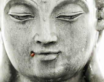 "Buddha and the Ladybug Photograph - Smiling buddha statue with ladybug in his smile  - Fine Art Photography - ""Bug Zen"" - 8 x 10"