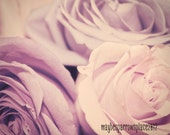 Lavender Roses - 8x10 photograph - fine art print  - shabby chic - gifts for women - nursery art - wedding