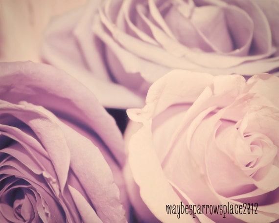 Lavender Roses - 8x10 photograph - fine art print  - shabby chic - gifts for women - nursery art - wedding