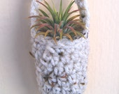 Air Plant Tillandsia Ionantha in a Handmade White Crochet Hanging Vase