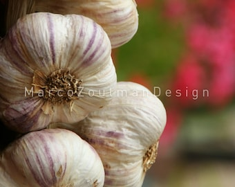 "French pink garlic - 8x8"" photography print"